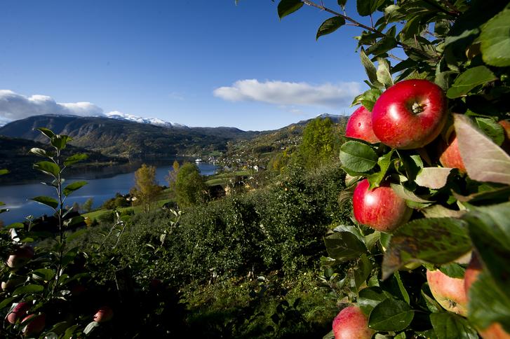 Fjordnorge og Hardanger